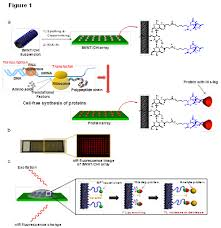 Applications Of Protein Array In Diagnostics Genomic And