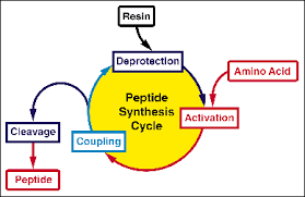solid phase peptide synthesis thesis Design and synthesis of a peptide which secondary structure could be controlled by a  this thesis uses solid-phase synthesis to synthesize molecules that will arrange.