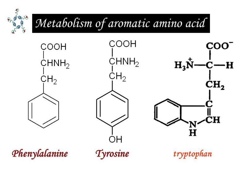Aromatic amino acid