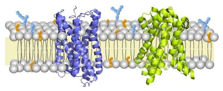 Membrane protein identification by shotgun proteomics