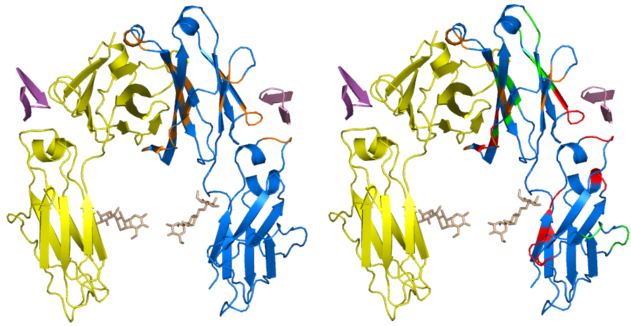 Brief Introduction of Protein-Protein Interaction (PPI)