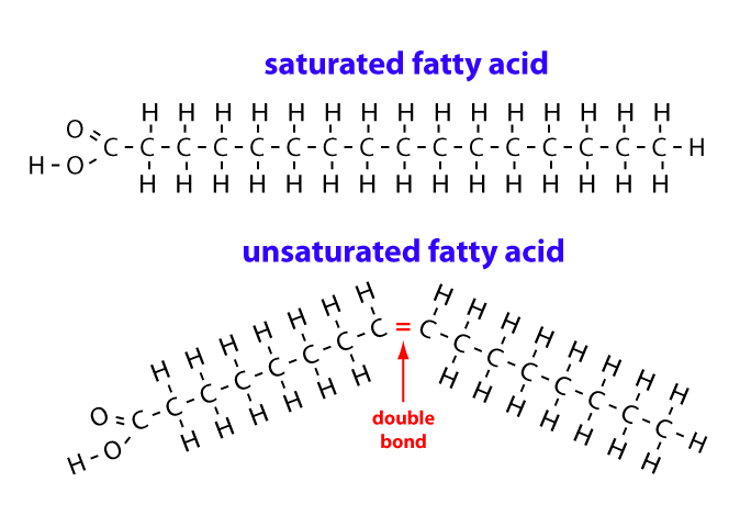 Fatty Acids: Types, Roles, and Analysis