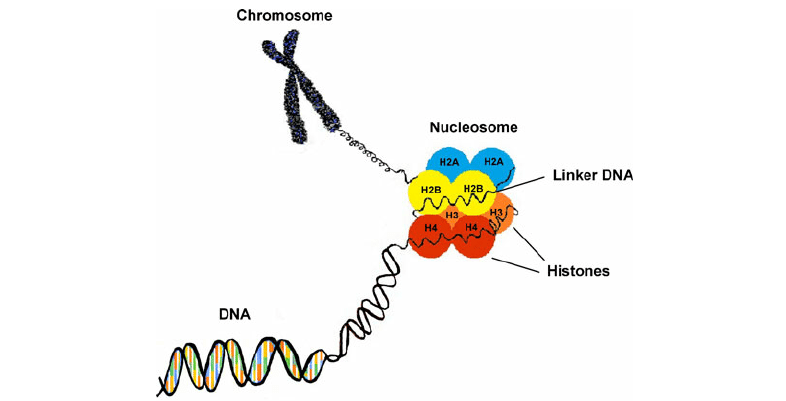 Strategies for Analyzing Histone Modifications