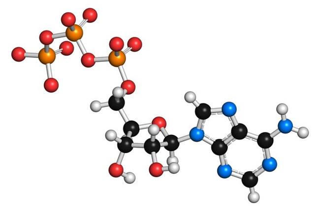 Protein-Phosphorylation