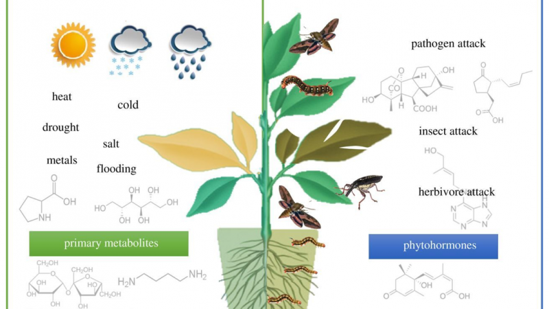 Application of Metabolomics in Plant Research