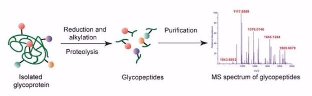 Glycopeptides Analysis