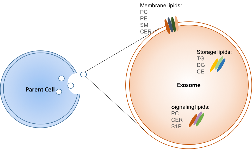 Exosome Lipidomics