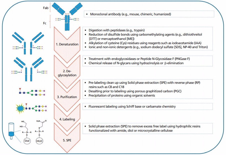 N-Glycans Profiling Services