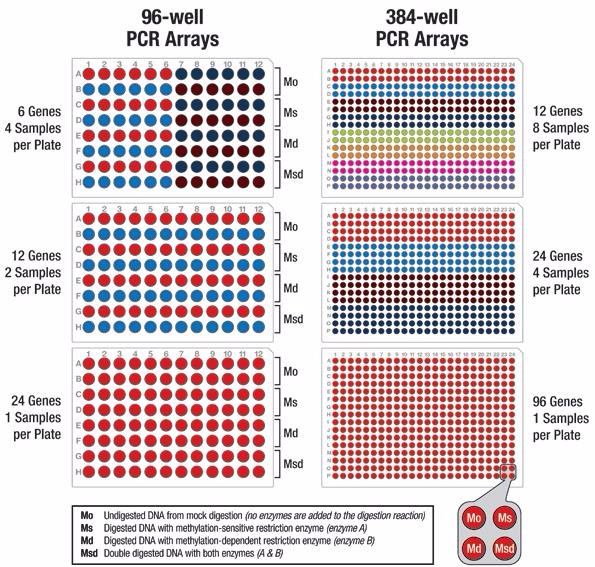 Cell Adhesion PCR Array Service