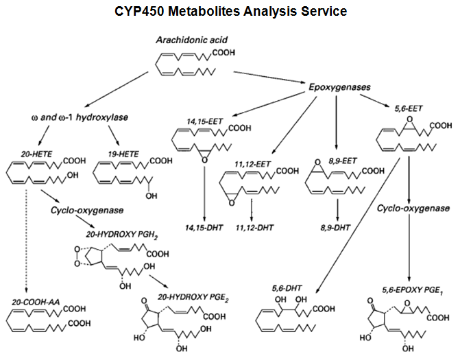 CYP450 Metabolites Analysis Service