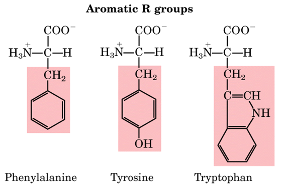 Aromatic  amino acids Analysis Service