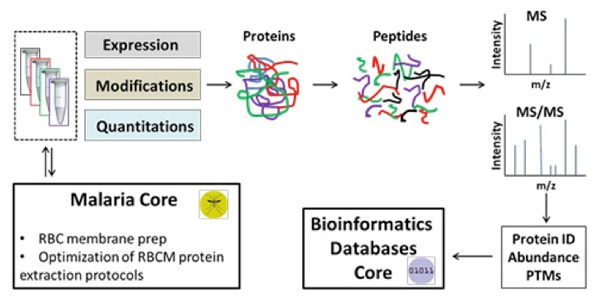 Bioinformatics Service for Proteomics