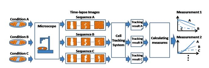 Cell Tracking Assay