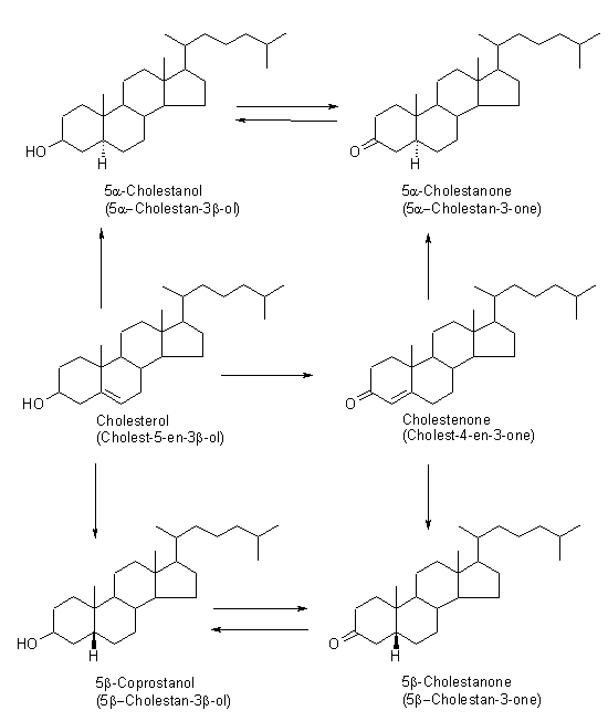 Cholestanol Analysis Service