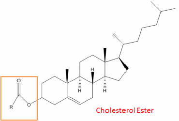 Cholesterol Ester Analysis Service