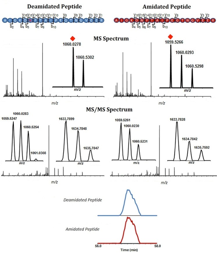 Characterization of Therapeutical Protein Deamidation