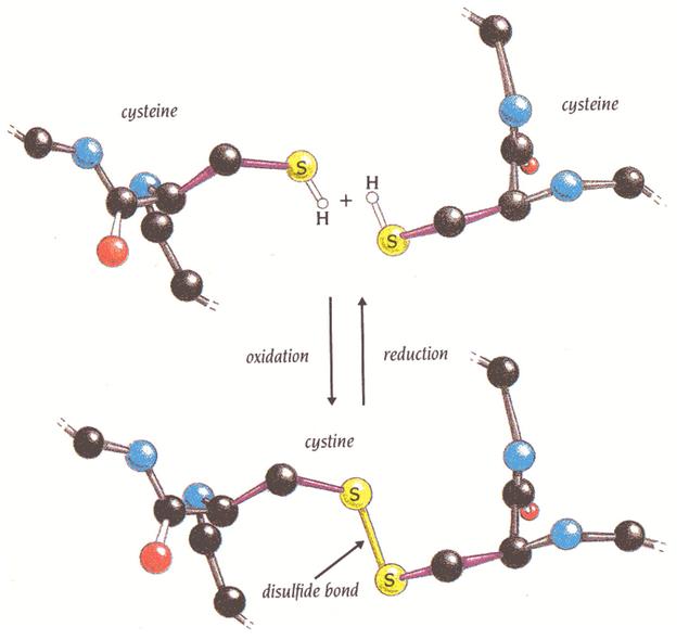 Image result for disulfide bond