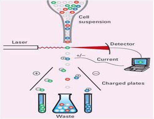 flow cytometry service creative proteomics