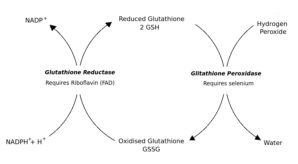 GSH and GSSG