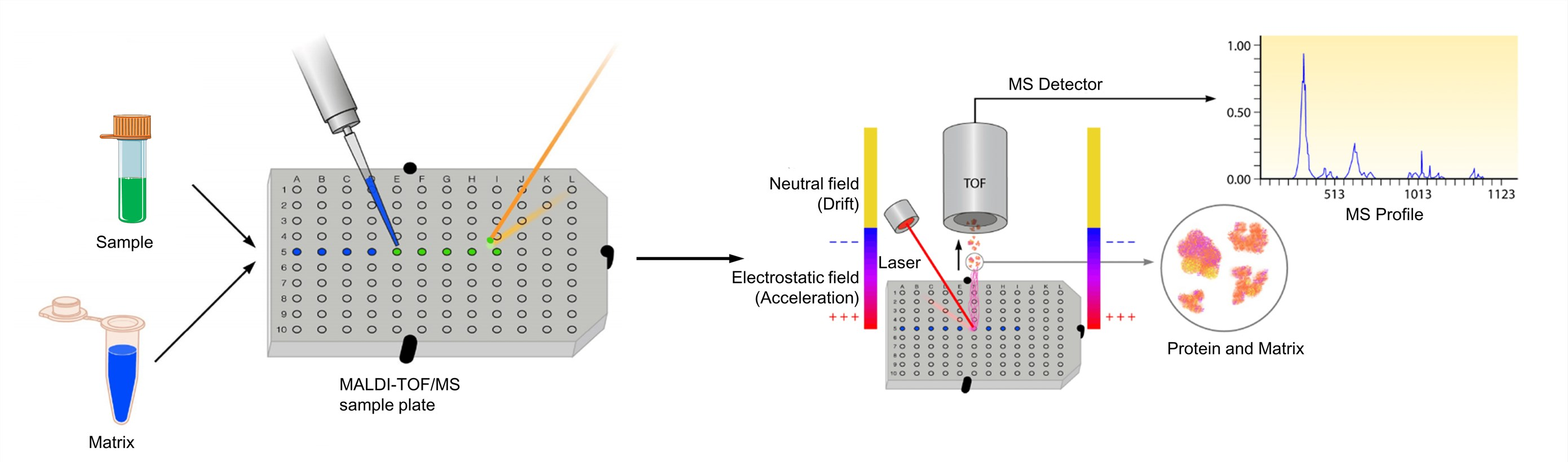 MALDI-TOF Mass Spectrometry - Creative Proteomics