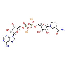 Nicotinamide adenine dinucleotide (NAD+)  Analysis Service