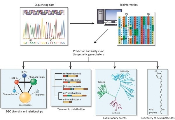 Overview of Bioinformatics Services