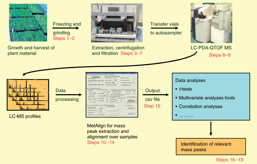 Plant Untargeted Metabolomics