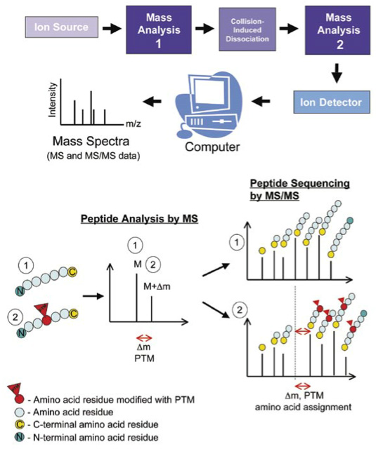 Protein Post-translational Modification Analysis
