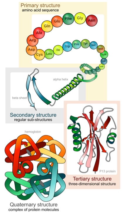Protein Structure Analysis Service