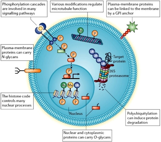 Proteomic Analysis of Post-translational Modifications Service