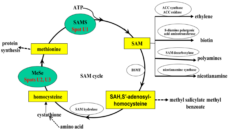 SAM and SAH Analysis Service
