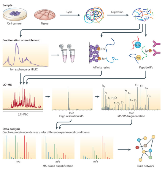 Introduction of protein sample preparation