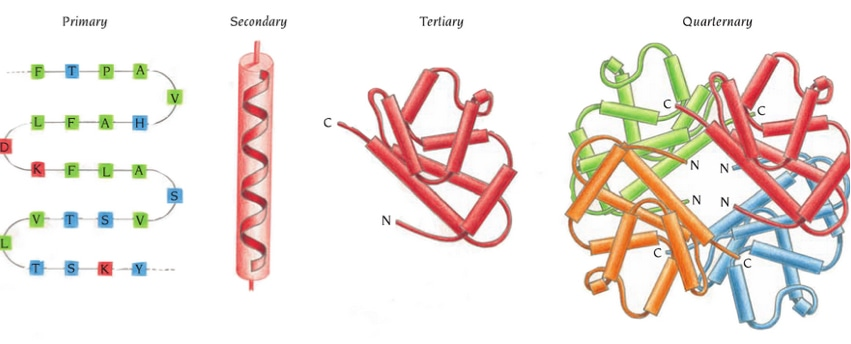 Structural Features Analysis of Proteins Service