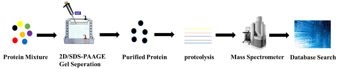 The Principle, Characteristics and Application of Peptide Mass Fingerprinting