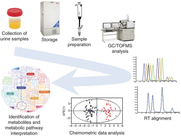 Urine Untargeted Metabolomics