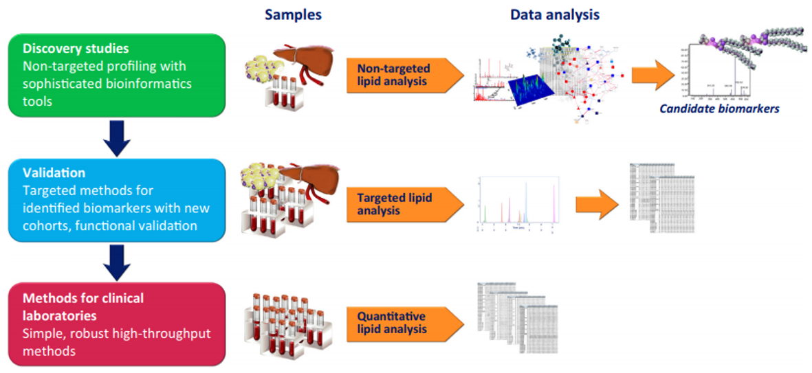 Analytical Workflows in Lipidomics